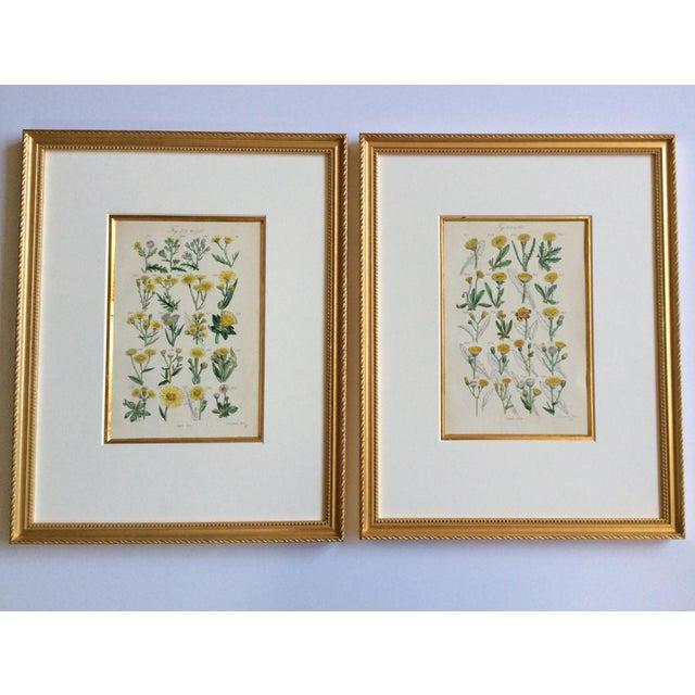 Botanical Prints C-1859 - A Pair - Image 2 of 9
