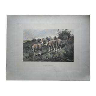 Antique Pasture Sheep Lithograph