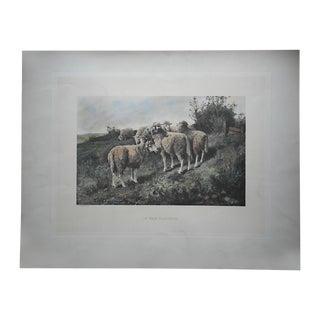 Antique Pasture Sheep Lithograph