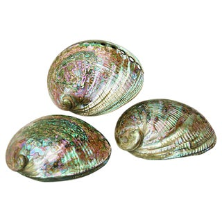 Mother-Of-Pearl Abalone Shells - Set of 3