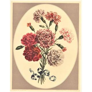Botanical Lithograph-Carnations