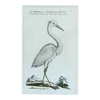 Circa 1763 J.L. Frisch White Heron Etching
