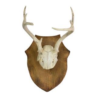 Vintage Whitetail Crest Mount VII