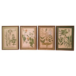 Antique Hand Colored Herbal Prints - Set of 4