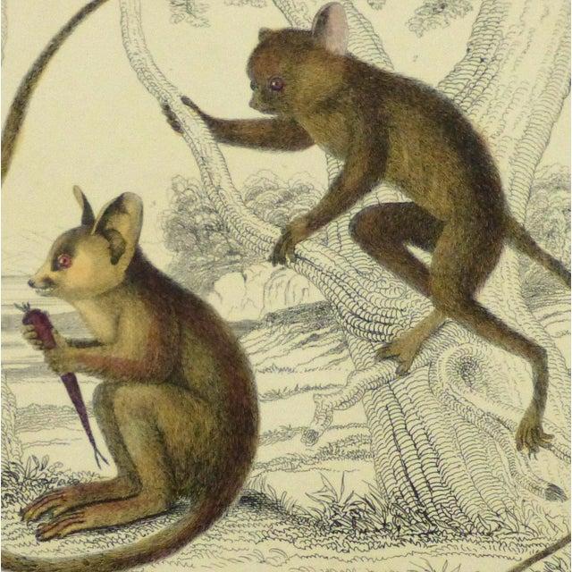Vintage Monkey Print Engraving, 1853 - Image 3 of 4