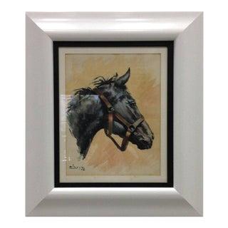 Spanish Horse Portrait, 1958 Aliaga, Spain