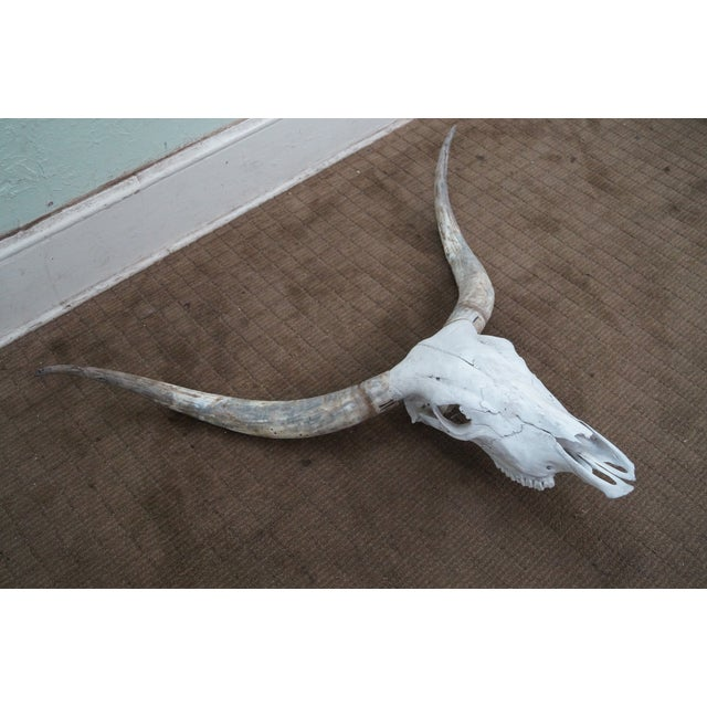 Image of Genuine Texas Longhorn Natural Skull with Horns