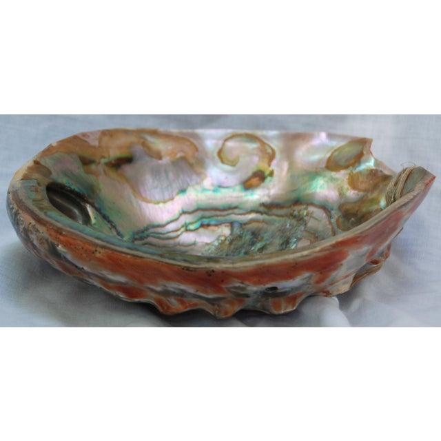 Vintage Large Abalone Shell - Image 4 of 8