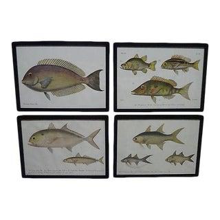 1862 Pieter Bleeker Exotic Fish Prints - Set of 4