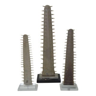 Vintage Italian Sawfish Rostrum / Bills
