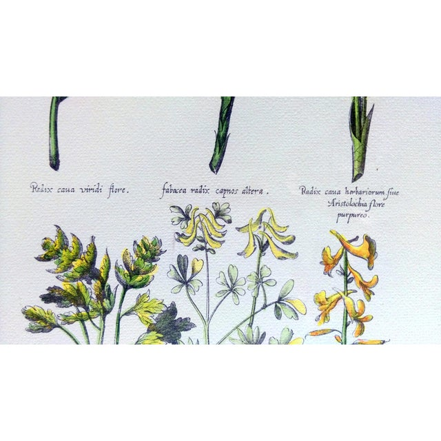 Botanical Print by Emanuel Sweert - Image 5 of 6