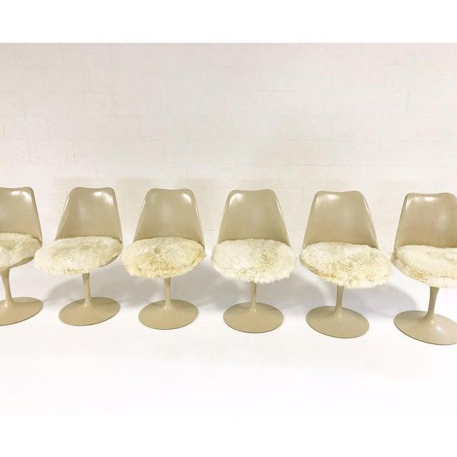 Eero Saarinen Tulip Chairs with Custom Brazilian Sheepskin Cushions - Set of 6 - Image 4 of 9