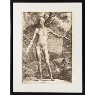 Antique Anatomical Engraving by Jan Wandelaar