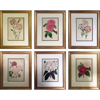 Vintage 19th Century Floral Prints - Set of 6