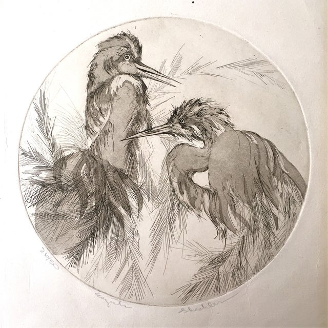 Image of Vintage Etching of Egrets