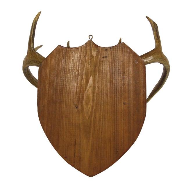 Mounted Deer Antlers - Image 4 of 4