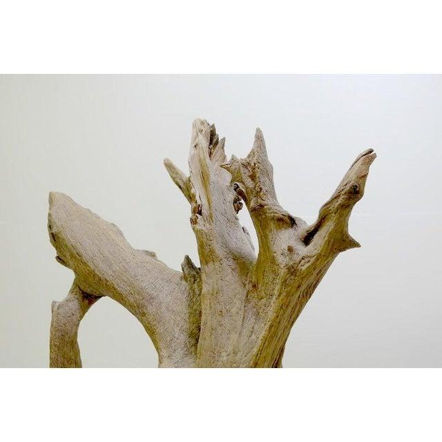 Drift Wood Sculpture - Image 3 of 9