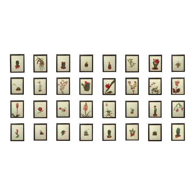 Framed Rock Plants - Set of 32 - Image 1 of 11
