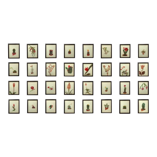 Image of Framed Rock Plants - Set of 32
