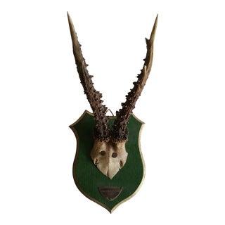 Vintage Deer Trophy With Silver Plaque