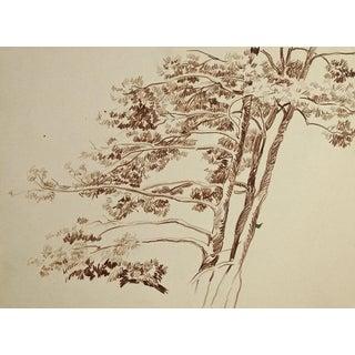 Windswept Tree Pencil Study