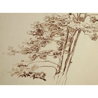 Windswept Tree Pencil Study