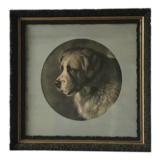 Antique St. Bernard Framed Print
