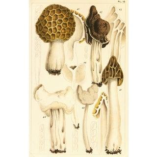 1891 British Edible Mushrooms Print