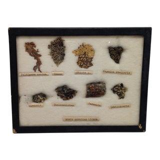 Vintage North American Lichen Specimen Collection