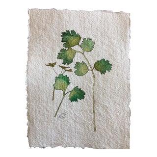 Cilantro Watercolor