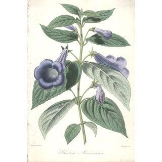 "Francois Herincq ""Shuria Mexicana"" 1861 Lithograph"
