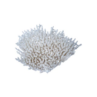 Natural Table Coral Fragment