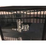 Image of Hadassah Zuberi Lioness at the Zoo Photo