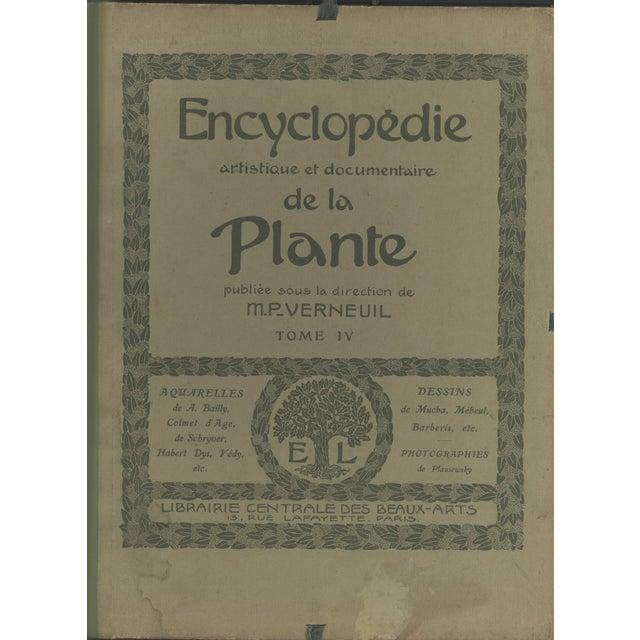 1904 Art Nouveau Botanical Drawing by Mucha - Image 4 of 4