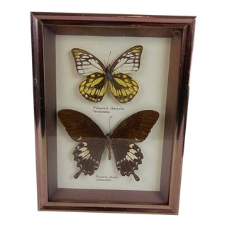 Vintage Butterfly Specimens Taxidermy Hanging Art