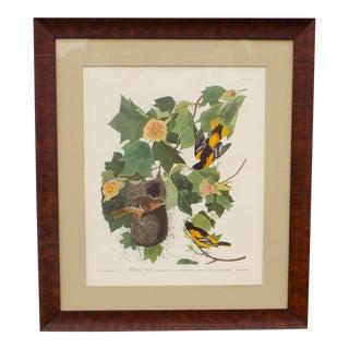 Audubon's Baltimore Orioles Framed Print