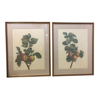Hand Colored Engravings of Fruit Branches - A Pair