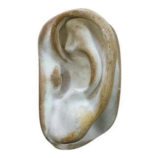 Artist Model Ear Sculpture Wall Art