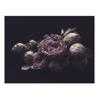 "Ashley Woodson Bailey ""Alex"" Photograph"