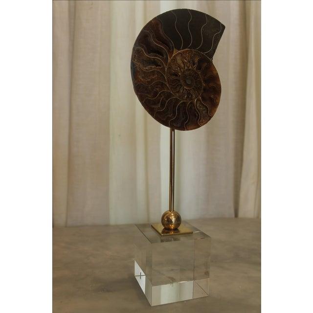 Natural Ammonite on Acrylic Base - Image 4 of 7