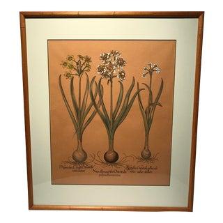 Narcissus Botanical Print