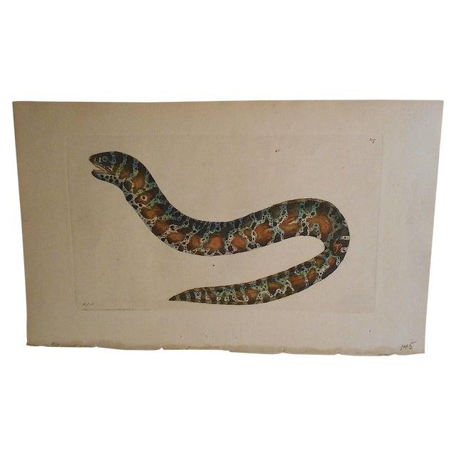 Sea Creature Antique English Engraving - Image 1 of 3