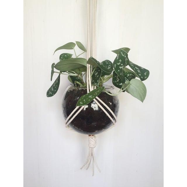 Macrame Plant Hanger - Image 3 of 6