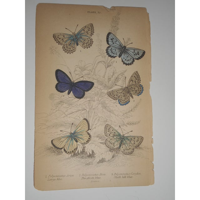 19th C. Hand Colored Engraving Butterflies - Image 2 of 3