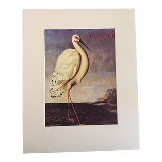 "Albert Eckhout's Maguari Stork - 1970s Print of 1644 Painting From ""Birds of Brazil"""