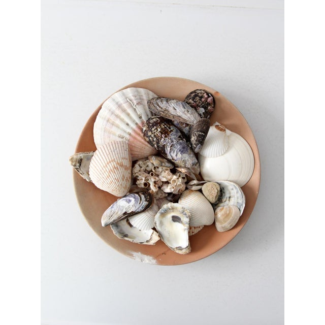 Vintage Sea Shell Collection - Set of 25 - Image 6 of 6