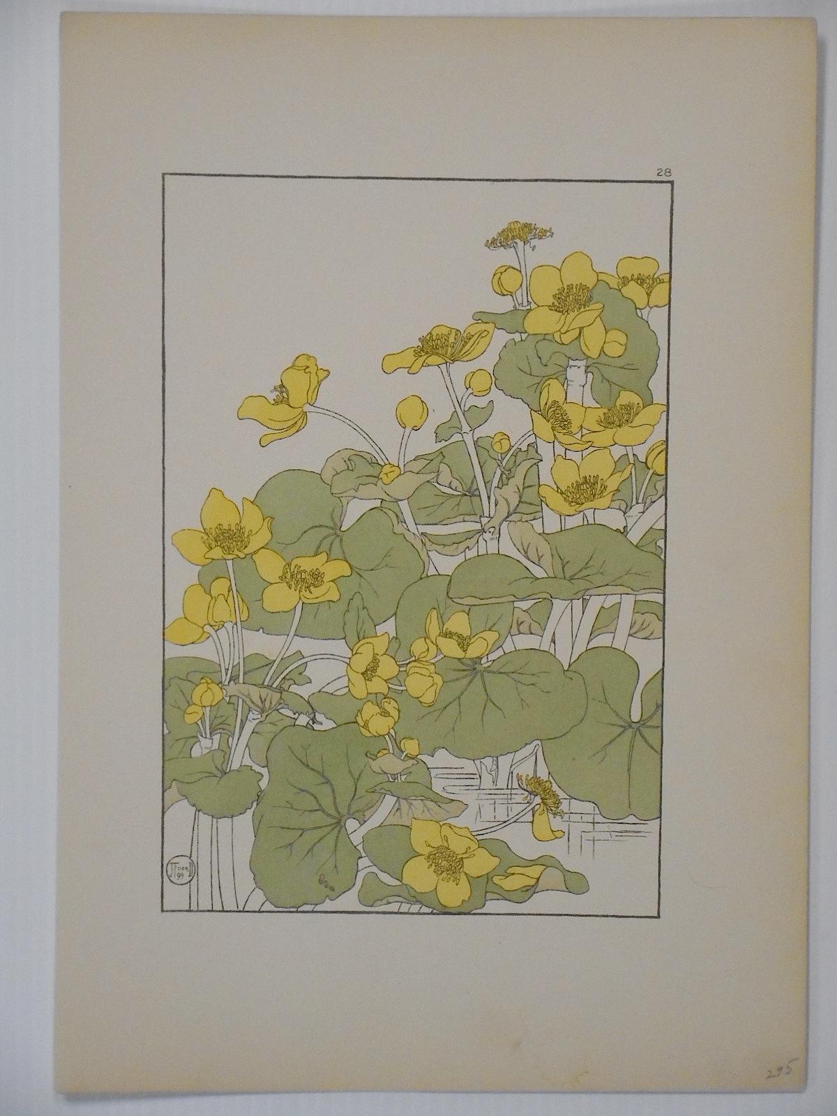 Antique Pochoir Botanicals Prints  Set of 3  Chairish