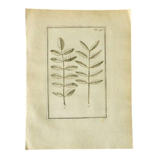 "1700 ""Leaves"" Antique Print"