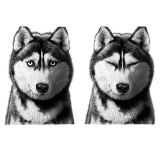 Siberian Husky Print