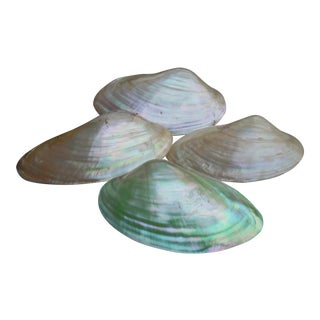 Natural Iridescent Whole Clam Seashells - Set of 4